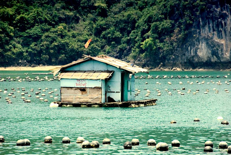 peace-piece-tom-abraham-the mussel farm | trại ốc
